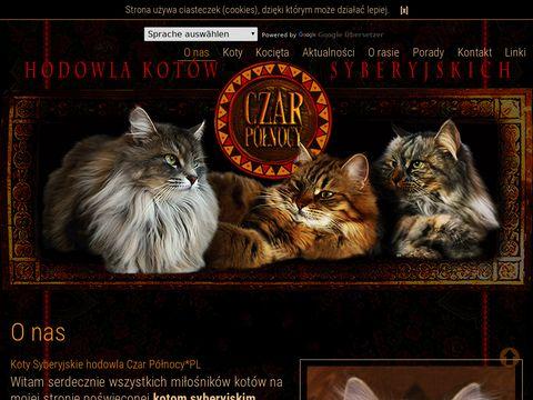 Hodowla kotów syberyjskich CzarPółnocy.PL
