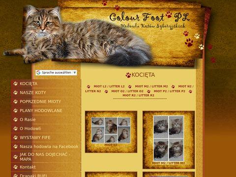 Hodowla kotów syberyjskich Colour Foot PL